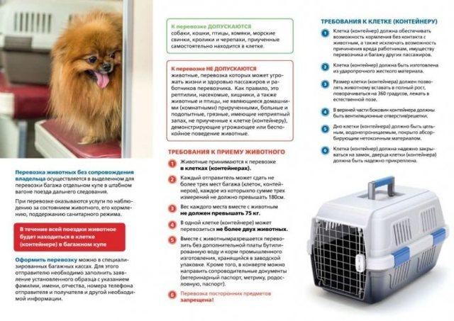 Перевозка животных по РЖД в 2021 году: правила транспортировки домашних кошек, собак и иных питомцев в поезде или электричке, и как провезти зверя без сопровождения?